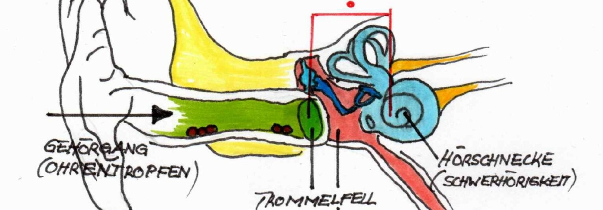 Darstellung des Innenohrs
